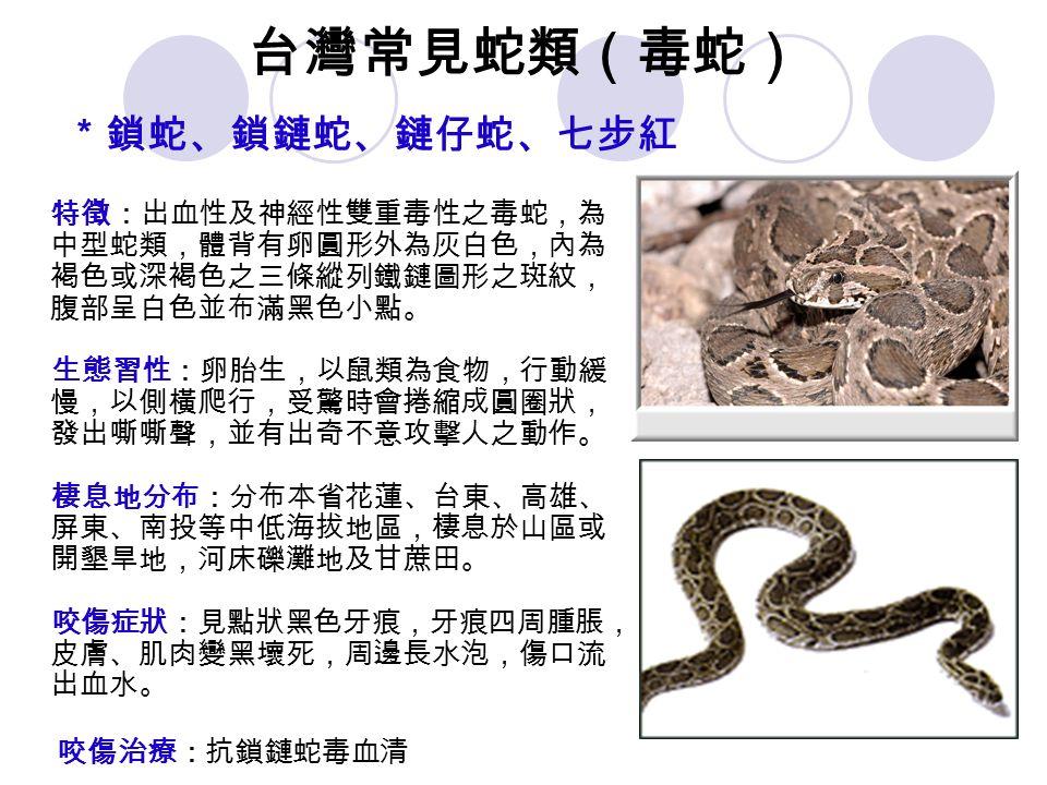台灣常見蛇類(毒蛇) *鎖蛇、鎖鏈蛇、鏈仔蛇、七步紅 特徵:出血性及神經性雙重毒性之毒蛇,為 中型蛇類,體背有卵圓形外為灰白色,內為 褐色或深褐色之三條縱列鐵鏈圖形之斑紋, 腹部呈白色並布滿黑色小點。 生態習性:卵胎生,以鼠類為食物,行動緩 慢,以側橫爬行,受驚時會捲縮成圓圈狀, 發出嘶嘶聲,並有出奇不意攻擊人之動作。 棲息地分布:分布本省花蓮、台東、高雄、 屏東、南投等中低海拔地區,棲息於山區或 開墾旱地,河床礫灘地及甘蔗田。 咬傷症狀:見點狀黑色牙痕,牙痕四周腫脹, 皮膚、肌肉變黑壞死,周邊長水泡,傷口流 出血水。 咬傷治療:抗鎖鏈蛇毒血清
