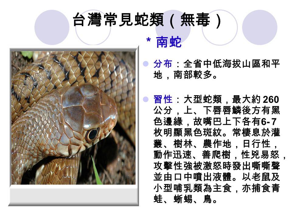 台灣常見蛇類(無毒) *南蛇 分布:全省中低海拔山區和平 地,南部較多。 習性:大型蛇類,最大約 260 公分,上、下唇唇鱗後方有黑 色邊緣,故嘴巴上下各有 6- 7 枚明顯黑色斑紋。常棲息於灌 叢、樹林、農作地,日行性, 動作迅速、善爬樹,性兇易怒, 攻擊性強被激怒時發出嘶嘶聲 並由口中噴出液體。以老鼠及 小型哺乳類為主食,亦捕食青 蛙、蜥蜴、鳥。