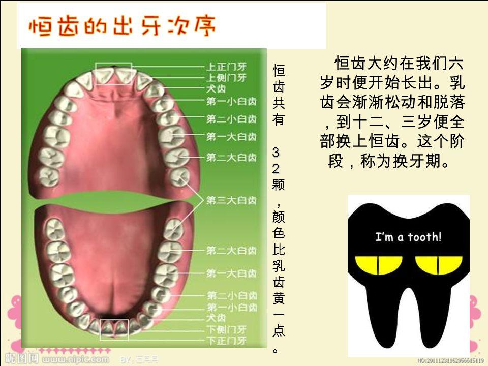 恒齿大约在我们六 岁时便开始长出。乳 齿会渐渐松动和脱落 ,到十二、三岁便全 部换上恒齿。这个阶 段,称为换牙期。 32恒齿共有 32颗,颜色比乳齿黄一点。32恒齿共有 32颗,颜色比乳齿黄一点。