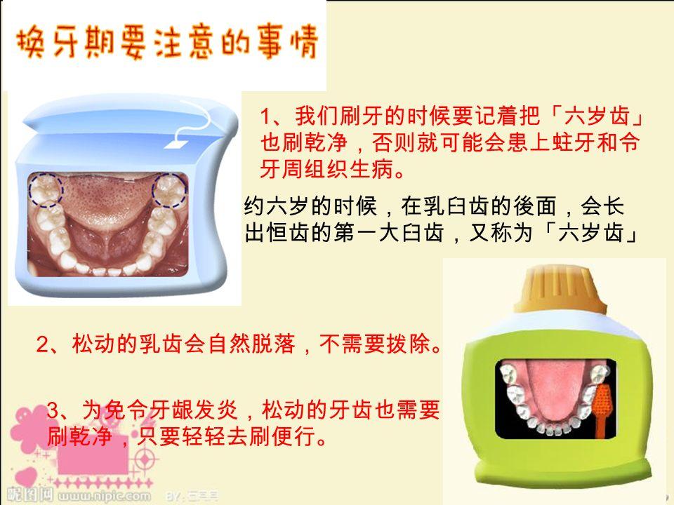 1 、我们刷牙的时候要记着把「六岁齿」 也刷乾净,否则就可能会患上蛀牙和令 牙周组织生病。 2 、松动的乳齿会自然脱落,不需要拨除。 3 、为免令牙龈发炎,松动的牙齿也需要 刷乾净,只要轻轻去刷便行。 约六岁的时候,在乳臼齿的後面,会长 出恒齿的第一大臼齿,又称为「六岁齿」
