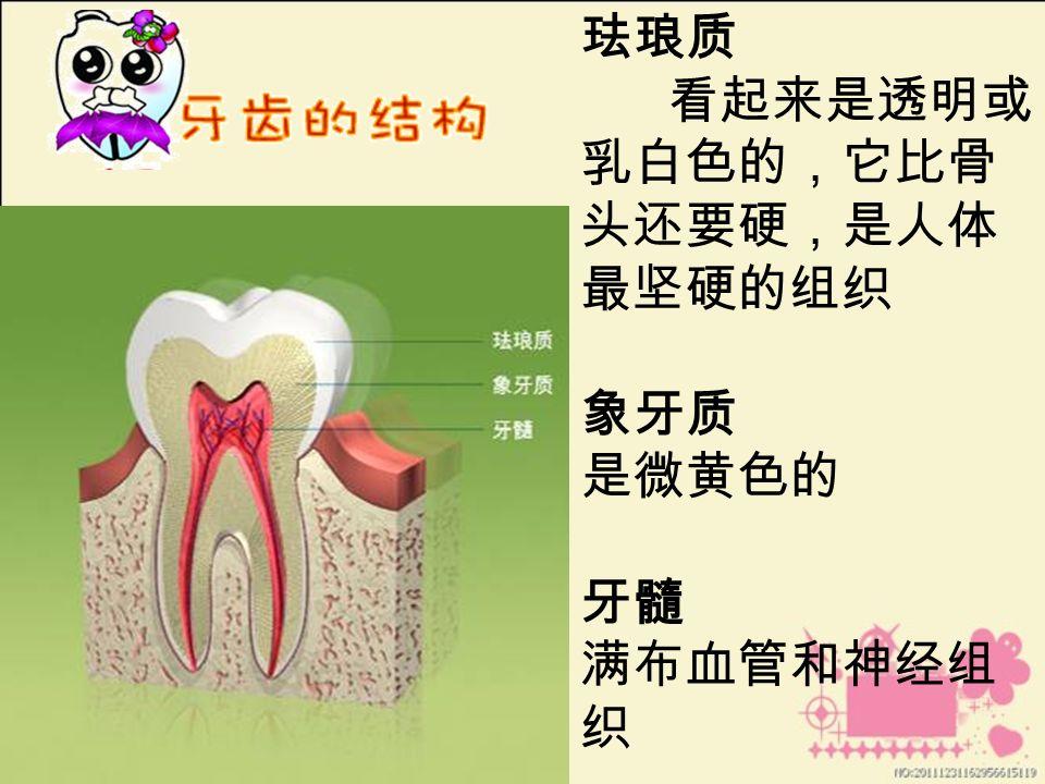 珐琅质 看起来是透明或 乳白色的,它比骨 头还要硬,是人体 最坚硬的组织 象牙质 是微黄色的 牙髓 满布血管和神经组 织