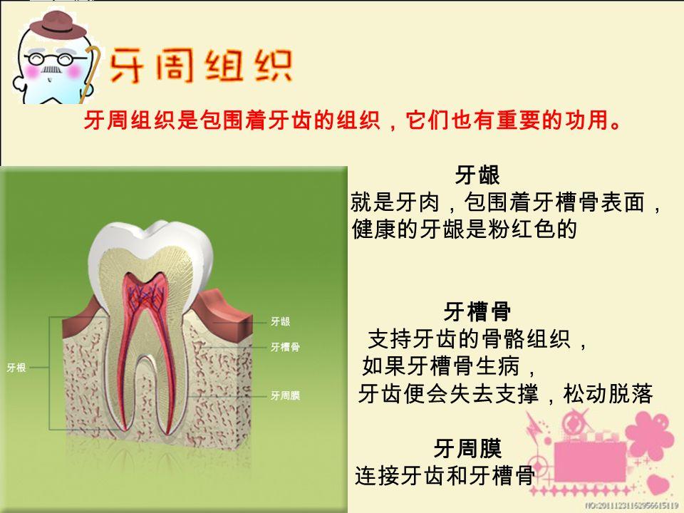 牙周组织是包围着牙齿的组织,它们也有重要的功用。 牙龈 就是牙肉,包围着牙槽骨表面, 健康的牙龈是粉红色的 牙槽骨 支持牙齿的骨骼组织, 如果牙槽骨生病, 牙齿便会失去支撑,松动脱落 牙周膜 连接牙齿和牙槽骨
