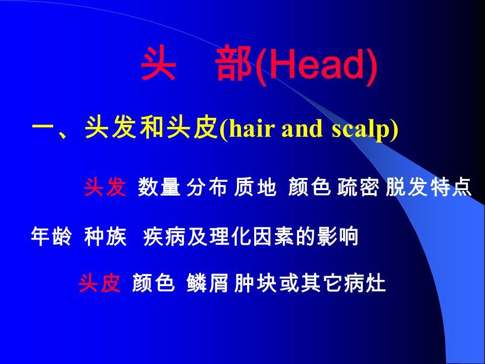 头 部 (Head) 一、头发和头皮 (hair and scalp) 头发 数量 分布 质地 颜色 疏密 脱发特点 年龄 种族 疾病及理化因素的影响 头皮 颜色 鳞屑 肿块或其它病灶