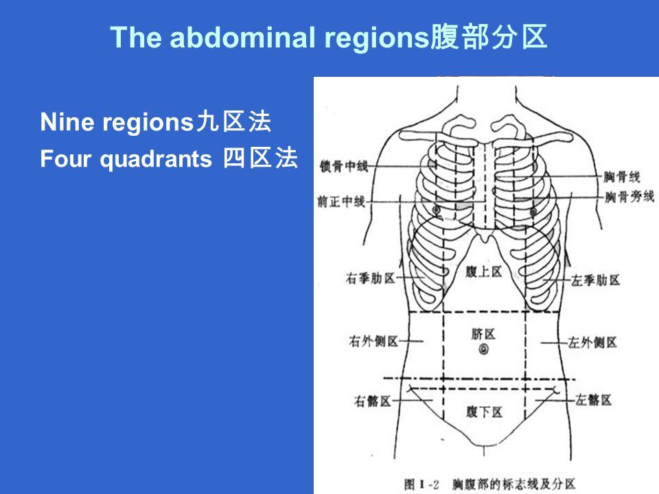 The abdominal regions 腹部分区 Nine regions 九区法 Four quadrants 四区法