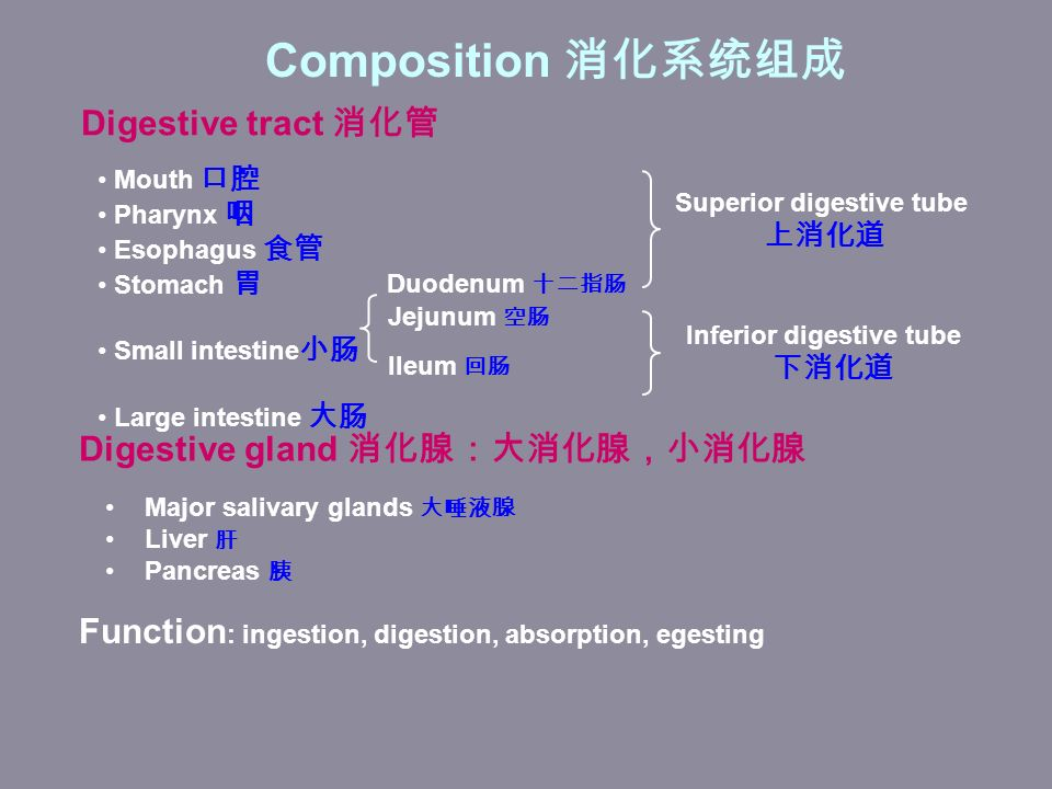 Composition 消化系统组成 Digestive tract 消化管 Mouth 口腔 Pharynx 咽 Esophagus 食管 Stomach 胃 Small intestine 小肠 Large intestine 大肠 Duodenum 十二指肠 Jejunum 空肠 Ileum 回肠 Digestive gland 消化腺:大消化腺,小消化腺 Superior digestive tube 上消化道 Inferior digestive tube 下消化道 Major salivary glands 大唾液腺 Liver 肝 Pancreas 胰 Function : ingestion, digestion, absorption, egesting