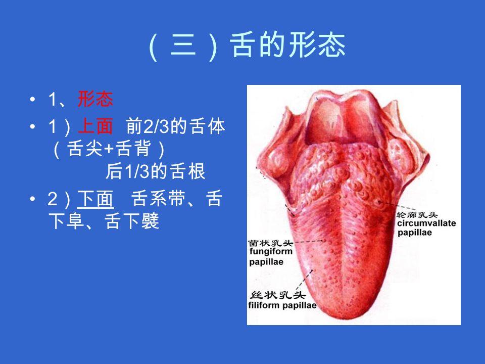 (三)舌的形态 1 、形态 1 )上面 前 2/3 的舌体 (舌尖 + 舌背) 后 1/3 的舌根 2 )下面 舌系带、舌 下阜、舌下襞下面