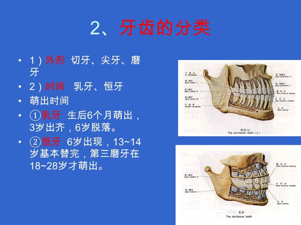 2 、牙齿的分类 1 )外形 切牙、尖牙、磨 牙 2 )时间 乳牙、恒牙 萌出时间 ①乳牙 生后 6 个月萌出, 3 岁出齐, 6 岁脱落。 ②恒牙 6 岁出现, 13~14 岁基本替完,第三磨牙在 18~28 岁才萌出。