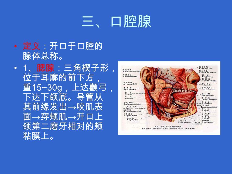 三、口腔腺 定义:开口于口腔的 腺体总称。 1 、腮腺:三角楔子形, 位于耳廓的前下方, 重 15~30g ,上达颧弓, 下达下颌底。导管从 其前缘发出 → 咬肌表 面 → 穿颊肌 → 开口上 颌第二磨牙相对的颊 粘膜上。