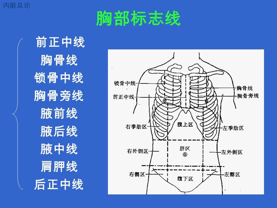 胸部标志线 前正中线 胸骨线 锁骨中线 胸骨旁线 腋前线 腋后线 腋中线 肩胛线 后正中线 内脏总论