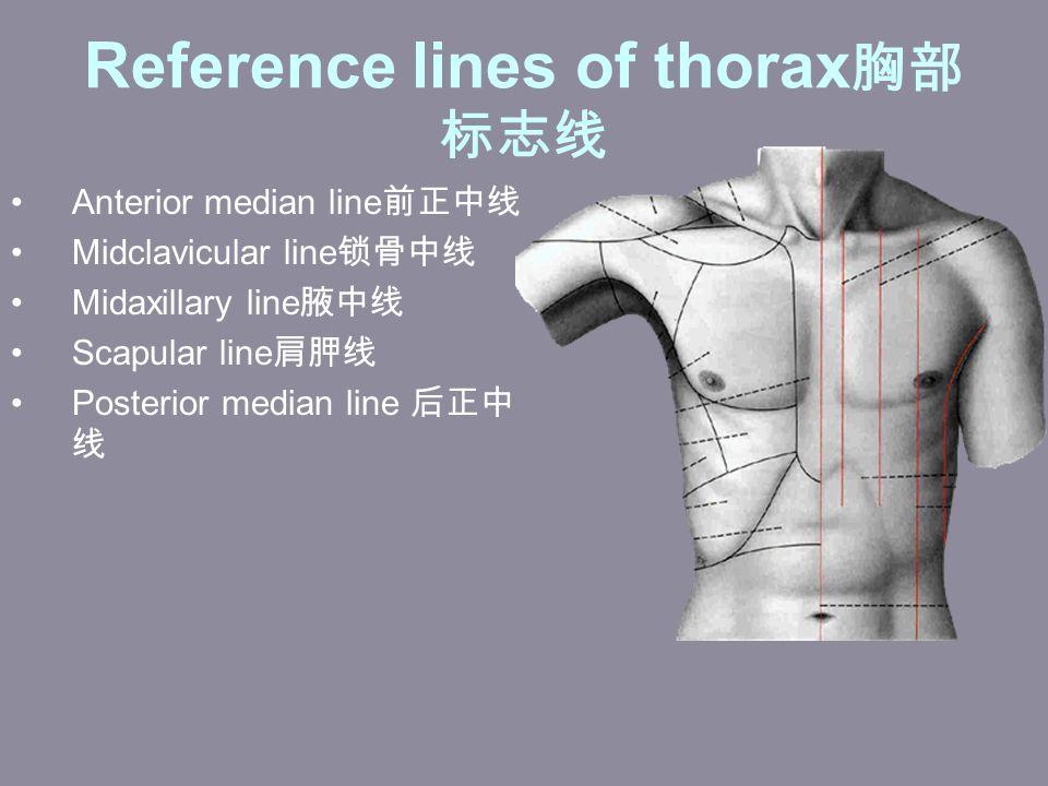 Reference lines of thorax 胸部 标志线 Anterior median line 前正中线 Midclavicular line 锁骨中线 Midaxillary line 腋中线 Scapular line 肩胛线 Posterior median line 后正中 线