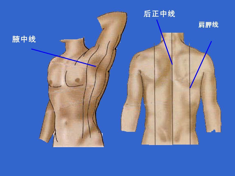 腋中线 肩胛线 后正中线