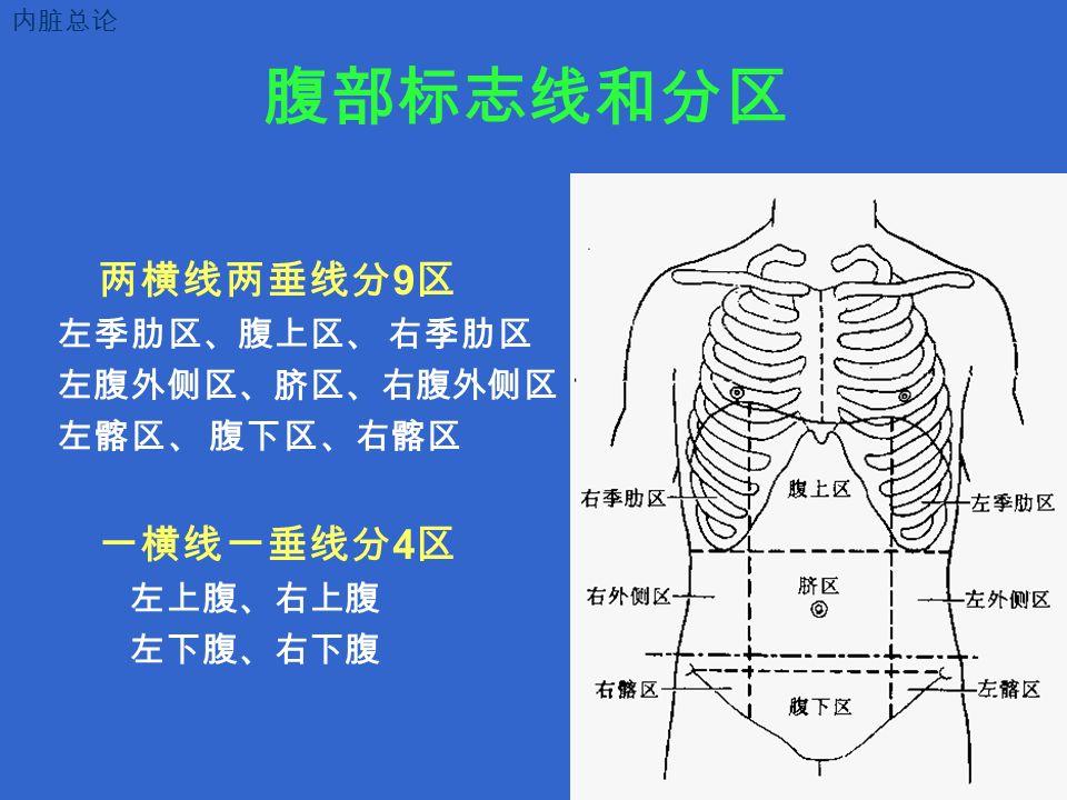 腹部标志线和分区 两横线两垂线分 9 区 左季肋区、腹上区、 右季肋区 左腹外侧区、脐区、右腹外侧区 左髂区、 腹下区、右髂区 一横线一垂线分 4 区 左上腹、右上腹 左下腹、右下腹 内脏总论