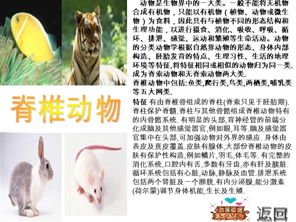 动物是生物界中的一大类。一般不能将无机物 合成有机物,只能以有机物(植物、动物或微生 物)为食料,因此具有与植物不同的形态结构和 生理功能,以进行摄食、消化、吸收、呼吸、循 环、排泄、感觉、运动和繁殖等生命活动。动物 的分类动物学根据自然界动物的形态、身体内部 构造、胚胎发育的特点、生理习性、生活的地理 环境等特征, 将特征相同或相似的动物归为同一类.