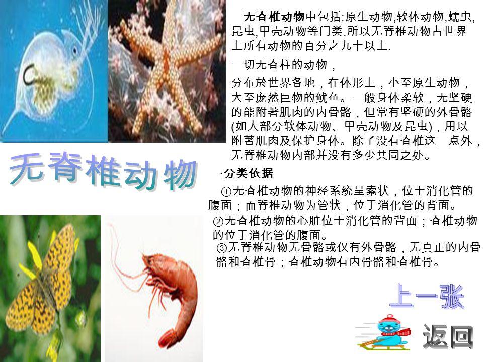 无脊椎动物中包括 : 原生动物, 软体动物, 蠕虫, 昆虫, 甲壳动物等门类. 所以无脊椎动物占世界 上所有动物的百分之九十以上.