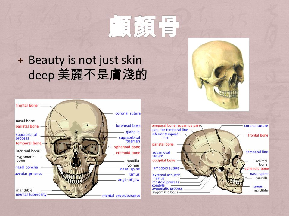 + Beauty is not just skin deep 美麗不是膚淺的