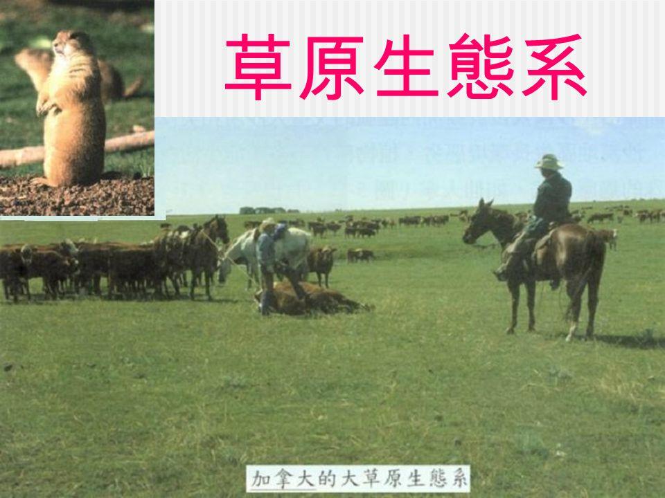 草原生態系