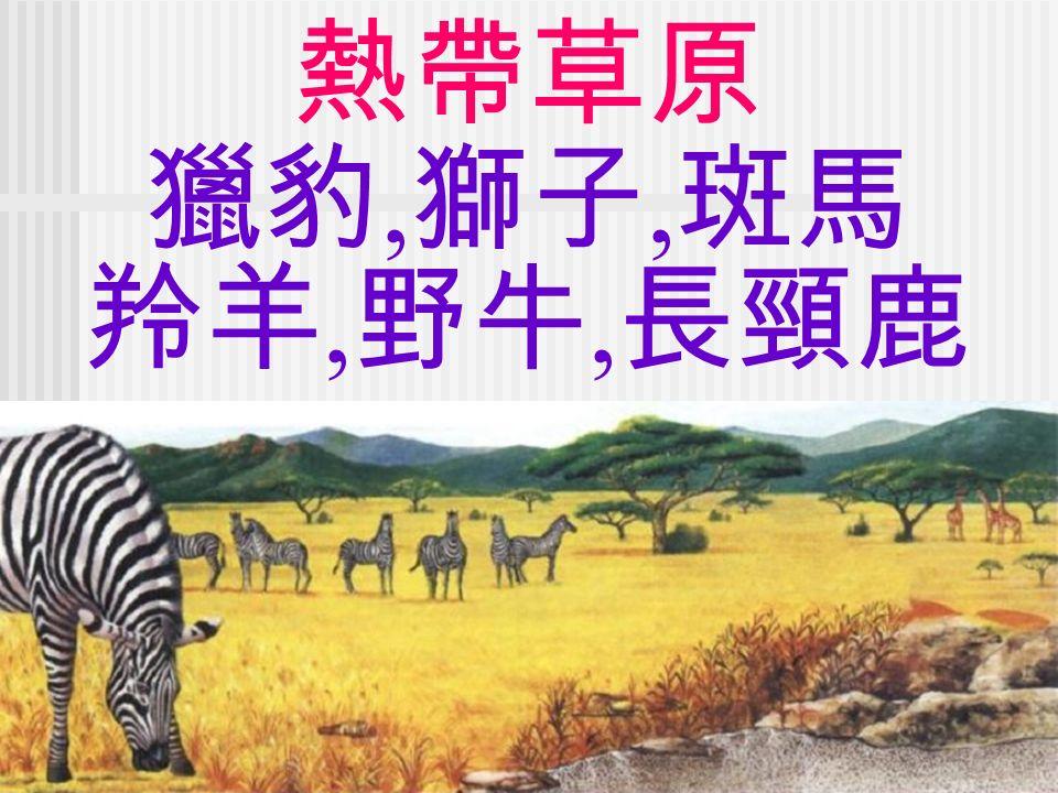 熱帶草原 獵豹, 獅子, 斑馬 羚羊, 野牛, 長頸鹿
