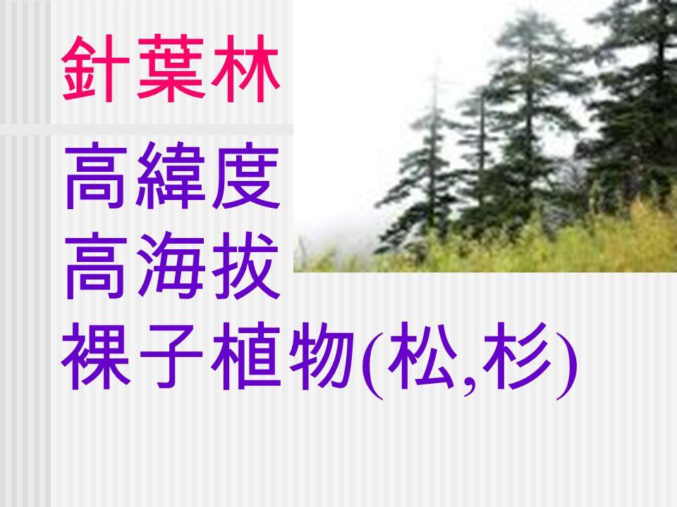 高緯度 高海拔 裸子植物 ( 松, 杉 ) 針葉林