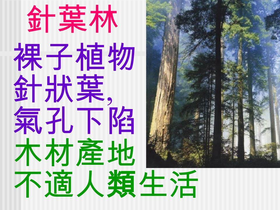 裸子植物 針狀葉, 氣孔下陷 木材產地 不適人類生活