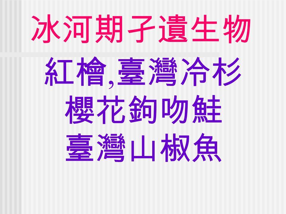 冰河期孑遺生物 紅檜, 臺灣冷杉 櫻花鉤吻鮭 臺灣山椒魚