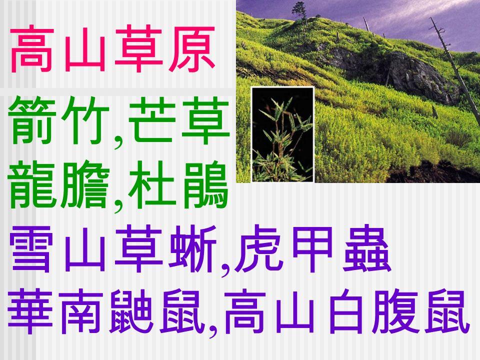 高山草原 箭竹, 芒草 龍膽, 杜鵑 雪山草蜥, 虎甲蟲 華南鼬鼠, 高山白腹鼠
