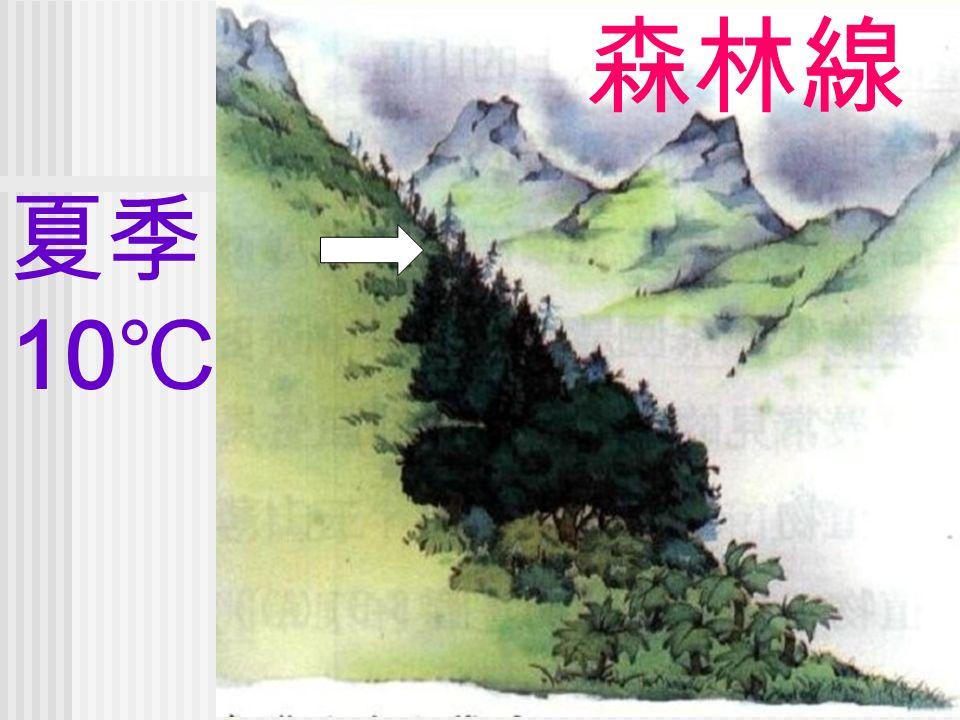 夏季 10 ℃ 森林線