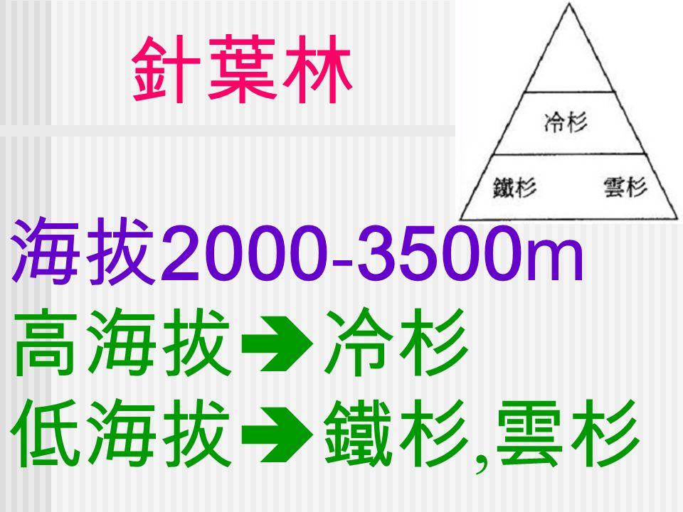 針葉林 海拔 2000 - 3500m 高海拔  冷杉 低海拔  鐵杉, 雲杉