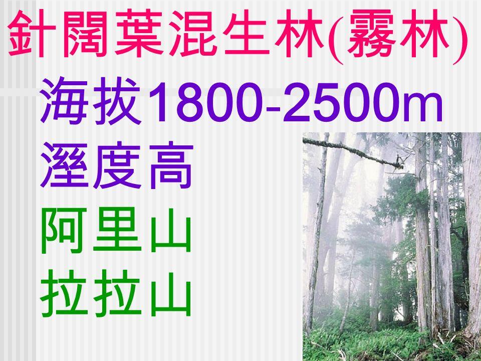 針闊葉混生林 ( 霧林 ) 海拔 1800 - 2500m 溼度高 阿里山 拉拉山
