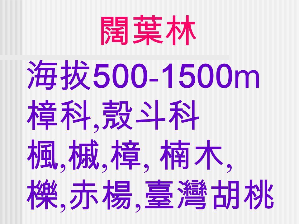 闊葉林 海拔 500 - 1500m 樟科, 殼斗科 楓, 槭, 樟, 楠木, 櫟, 赤楊, 臺灣胡桃