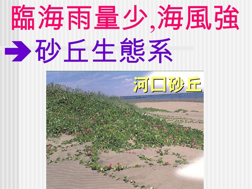 臨海雨量少, 海風強  砂丘生態系
