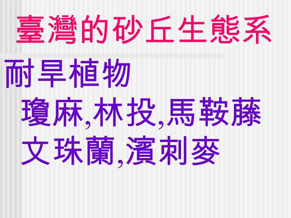 臺灣的砂丘生態系 耐旱植物 瓊麻, 林投, 馬鞍藤 文珠蘭, 濱刺麥