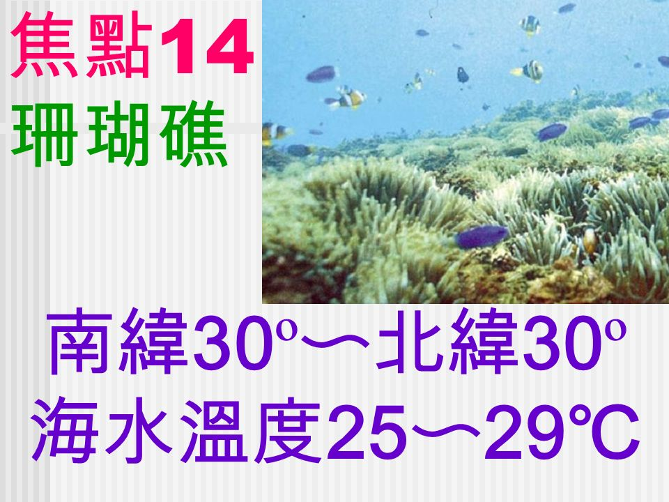 焦點 14 珊瑚礁 南緯 30 º 〜北緯 30 º 海水溫度 25 〜 29 ℃