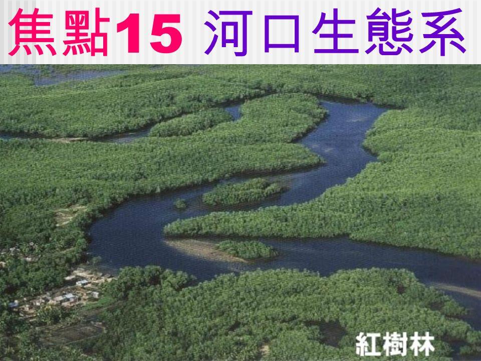 焦點 15 河口生態系