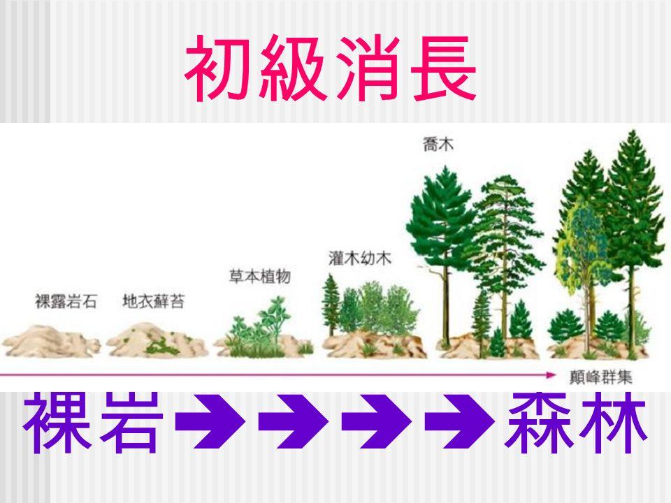 初級消長 裸岩  森林