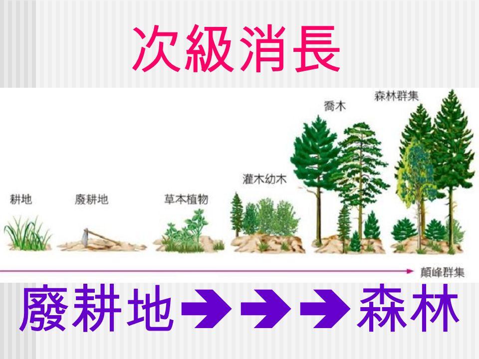 次級消長 廢耕地  森林
