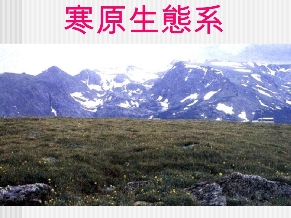 寒原生態系