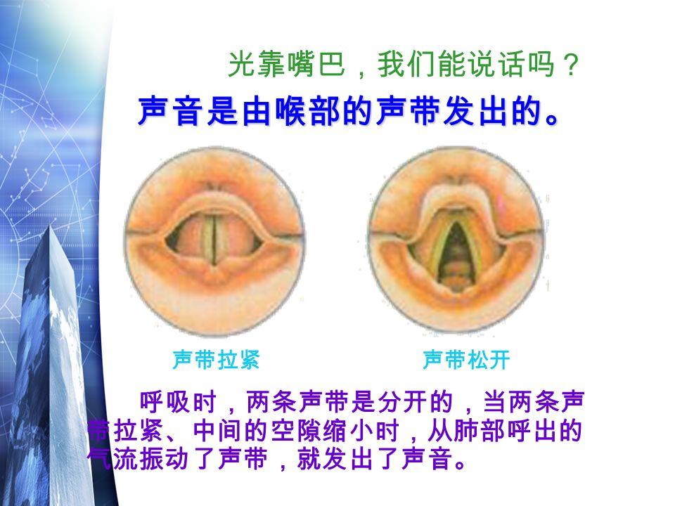 光靠嘴巴,我们能说话吗? 呼吸时,两条声带是分开的,当两条声 带拉紧、中间的空隙缩小时,从肺部呼出的 气流振动了声带,就发出了声音。 声音是由喉部的声带发出的。 声音是由喉部的声带发出的。 声带拉紧声带松开