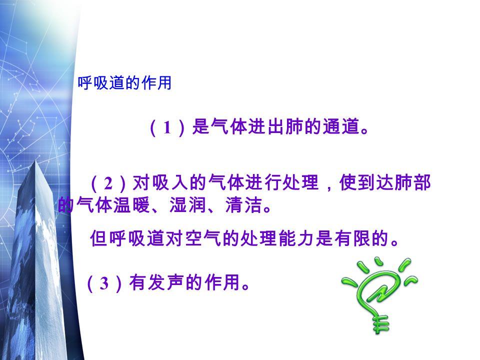呼吸道的作用 ( 1 )是气体进出肺的通道。 ( 2 )对吸入的气体进行处理,使到达肺部 的气体温暖、湿润、清洁。 但呼吸道对空气的处理能力是有限的。 ( 3 )有发声的作用。