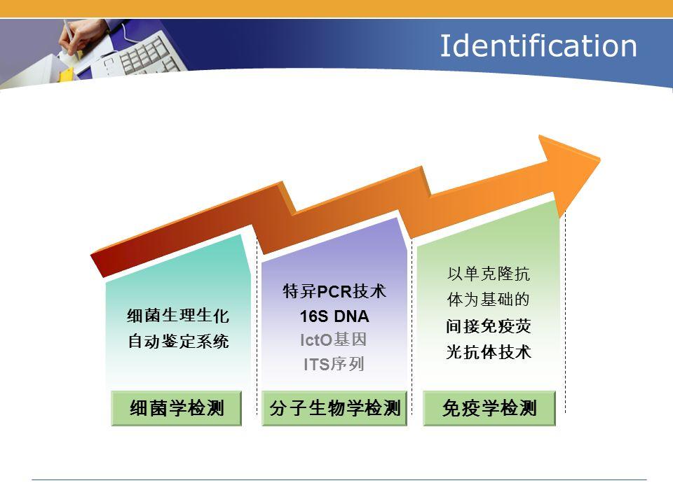 Identification 免疫学检测 细菌生理生化 自动鉴定系统 分子生物学检测细菌学检测 特异 PCR 技术 16S DNA IctO 基因 ITS 序列 以单克隆抗 体为基础的 间接免疫荧 光抗体技术