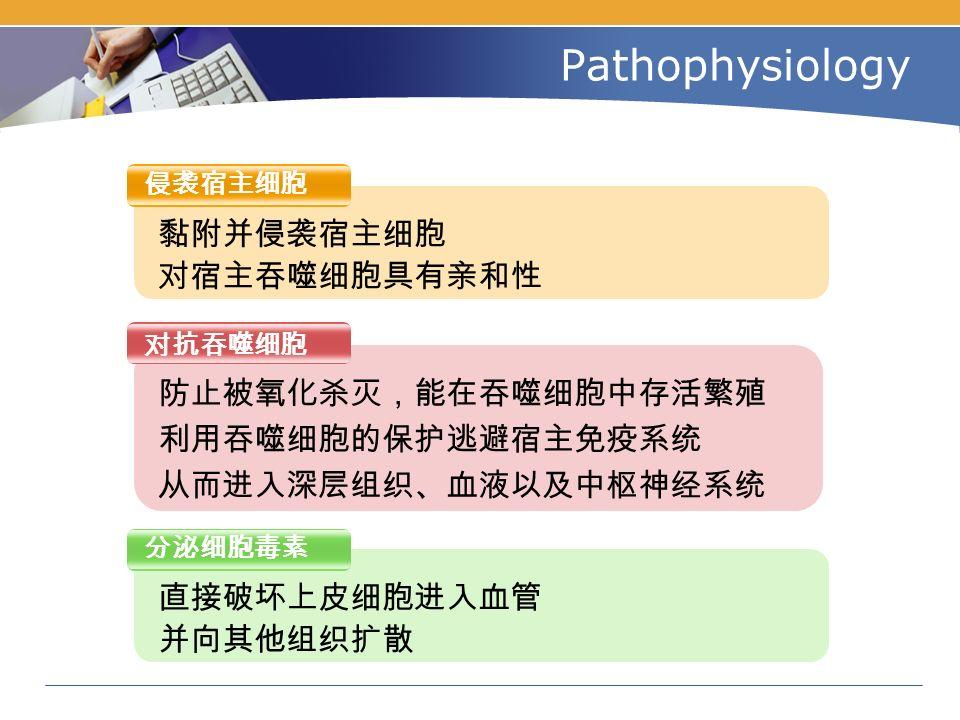 Pathophysiology 侵袭宿主细胞 对抗吞噬细胞 分泌细胞毒素 黏附并侵袭宿主细胞 对宿主吞噬细胞具有亲和性 直接破坏上皮细胞进入血管 并向其他组织扩散 防止被氧化杀灭,能在吞噬细胞中存活繁殖 利用吞噬细胞的保护逃避宿主免疫系统 从而进入深层组织、血液以及中枢神经系统
