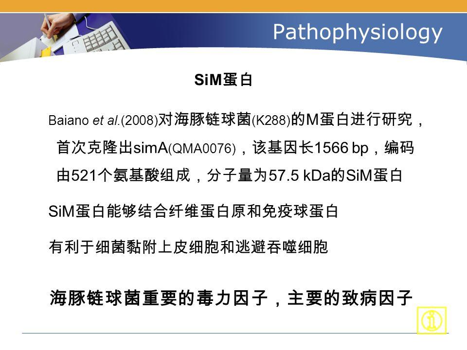 Pathophysiology SiM 蛋白 Baiano et al.(2008) 对海豚链球菌 (K288) 的 M 蛋白进行研究, 首次克隆出 simA (QMA0076) ,该基因长 1566 bp ,编码 由 521 个氨基酸组成,分子量为 57.5 kDa 的 SiM 蛋白 SiM 蛋白能够结合纤维蛋白原和免疫球蛋白 有利于细菌黏附上皮细胞和逃避吞噬细胞 海豚链球菌重要的毒力因子,主要的致病因子