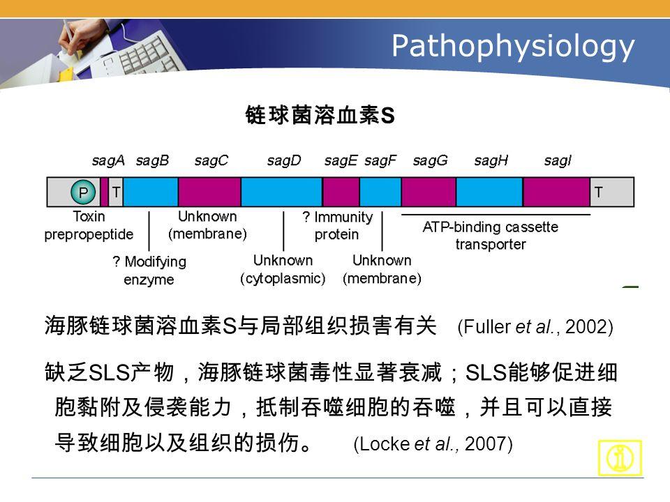Pathophysiology 链球菌溶血素 S 海豚链球菌溶血素 S 与局部组织损害有关 (Fuller et al., 2002) 缺乏 SLS 产物,海豚链球菌毒性显著衰减; SLS 能够促进细 胞黏附及侵袭能力,抵制吞噬细胞的吞噬,并且可以直接 导致细胞以及组织的损伤。 (Locke et al., 2007)