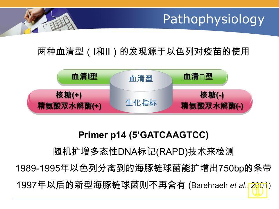 Primer p14 (5'GATCAAGTCC) 随机扩增多态性 DNA 标记 (RAPD) 技术来检测 1989-1995 年以色列分离到的海豚链球菌能扩增出 750bp 的条带 1997 年以后的新型海豚链球菌则不再含有 ( Barehraeh et al., 2001) Pathophysiology 两种血清型( I 和Ⅱ)的发现源于以色列对疫苗的使用 血清Ⅱ型 血清 I 型 核糖 (-) 精氨酸双水解酶 (-) 核糖 (-) 精氨酸双水解酶 (-) 核糖 (+) 精氨酸双水解酶 (+) 核糖 (+) 精氨酸双水解酶 (+) 生化指标 血清型