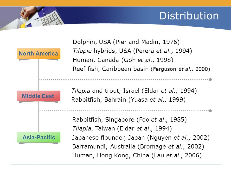 Distribution Dolphin, USA (Pier and Madin, 1976) Tilapia hybrids, USA (Perera et al., 1994) Human, Canada (Goh et al., 1998) Reef fish, Caribbean basin (Ferguson et al., 2000) Tilapia and trout, Israel (Eldar et al., 1994) Rabbitfish, Bahrain (Yuasa et al., 1999) Rabbitfish, Singapore (Foo et al., 1985) Tilapia, Taiwan (Eldar et al., 1994) Japanese flounder, Japan (Nguyen et al., 2002) Barramundi, Australia (Bromage et al., 2002) Human, Hong Kong, China (Lau et al., 2006) North America Middle East Asia-Pacific
