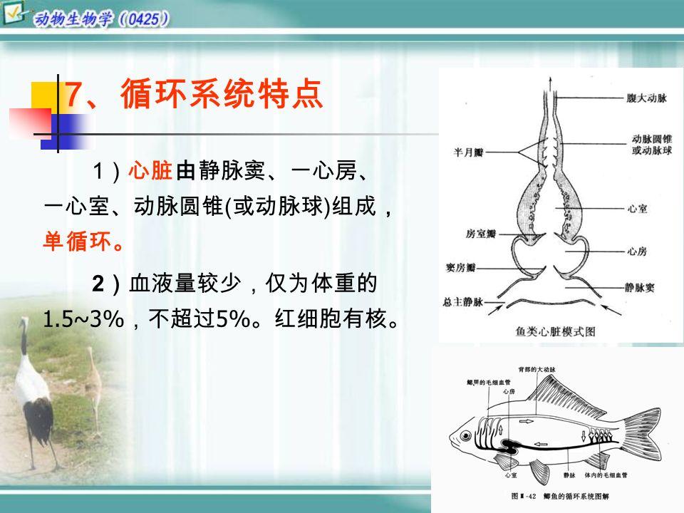7 、循环系统特点 1 )心脏由静脉窦、一心房、 一心室、动脉圆锥 ( 或动脉球 ) 组成, 单循环。 2 )血液量较少,仅为体重的 1.5~3% ,不超过 5% 。红细胞有核。