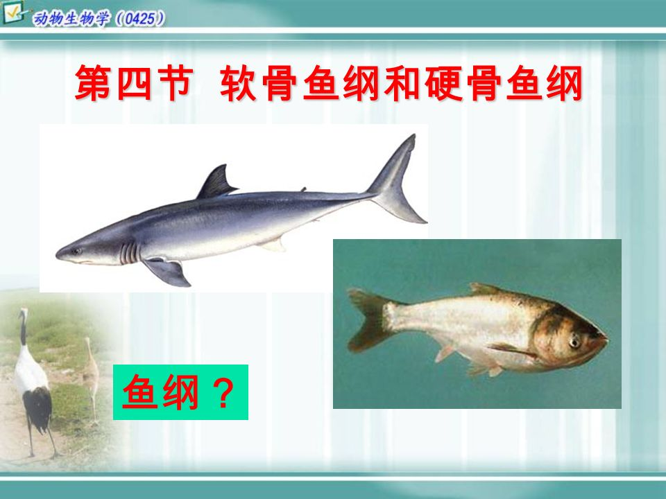 第四节 软骨鱼纲和硬骨鱼纲 鱼纲?