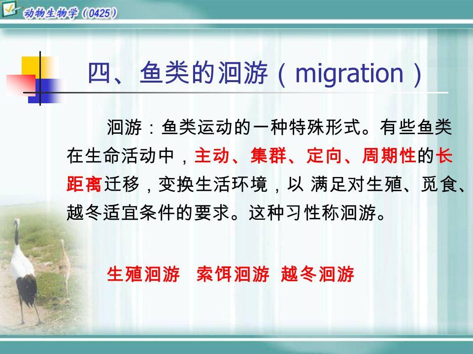 洄游:鱼类运动的一种特殊形式。有些鱼类 在生命活动中,主动、集群、定向、周期性的长 距离迁移,变换生活环境,以 满足对生殖、觅食、 越冬适宜条件的要求。这种习性称洄游。 生殖洄游 索饵洄游 越冬洄游 四、鱼类的洄游( migration )