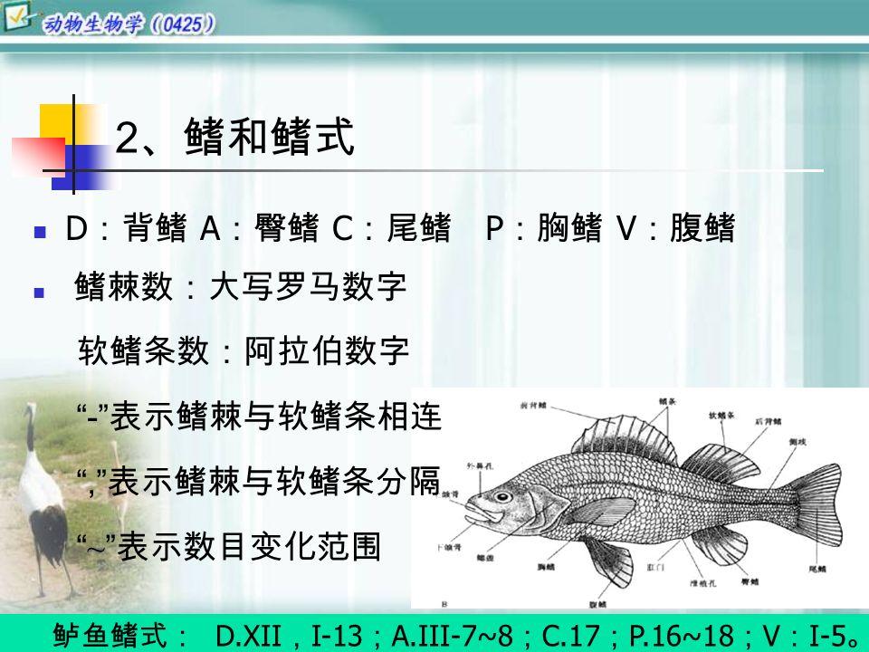 D :背鳍 A :臀鳍 C :尾鳍 P :胸鳍 V :腹鳍 鳍棘数:大写罗马数字 软鳍条数:阿拉伯数字 - 表示鳍棘与软鳍条相连 , 表示鳍棘与软鳍条分隔 ~ 表示数目变化范围 鲈鱼鳍式: D.XII , I-13 ; A.III-7~8 ; C.17 ; P.16~18 ; V : I-5 。 2 、鳍和鳍式