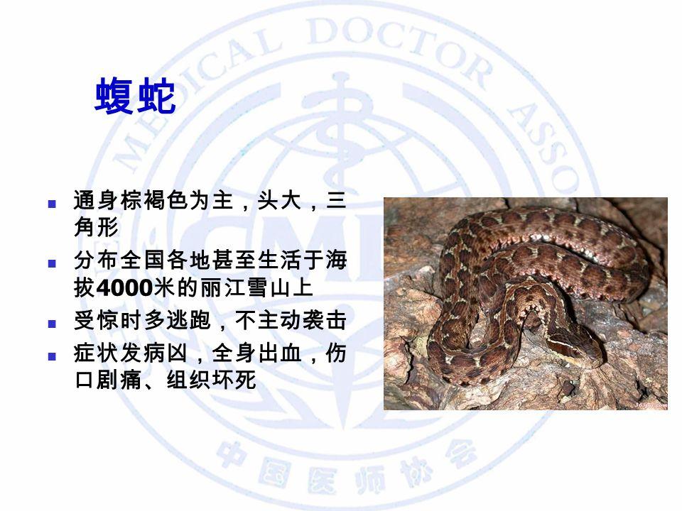 蝮蛇 通身棕褐色为主,头大,三 角形 分布全国各地甚至生活于海 拔 4000 米的丽江雪山上 受惊时多逃跑,不主动袭击 症状发病凶,全身出血,伤 口剧痛、组织坏死