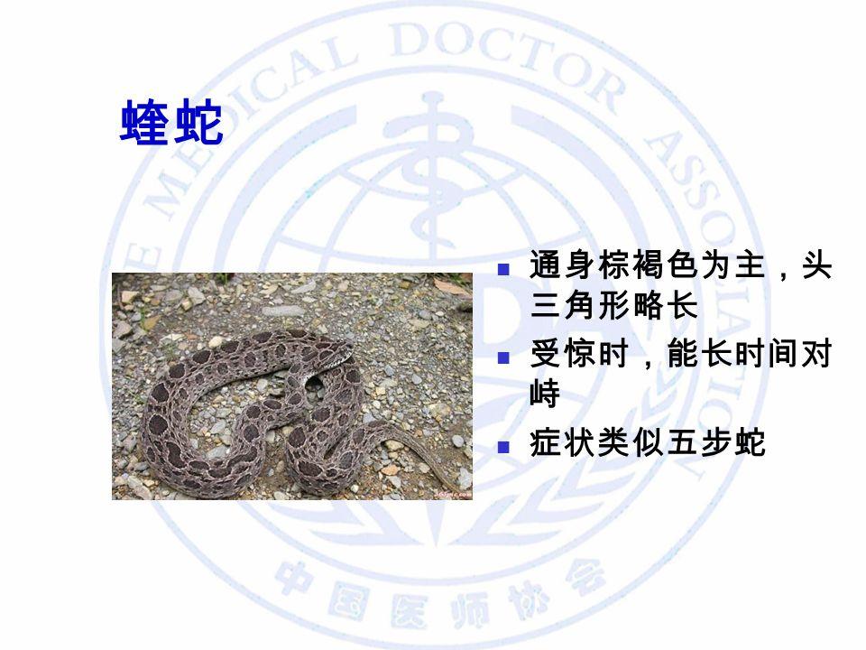 蝰蛇 通身棕褐色为主,头 三角形略长 受惊时,能长时间对 峙 症状类似五步蛇